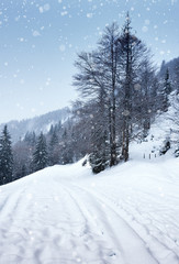 Snow-covered winter forest, Road snowfall.