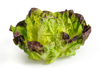fresh lettuce salad