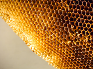 Beehive Honeycomb Textured close up
