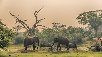 Sri Lanka: group of wild elephants at jungle drinking place of Yala National Park