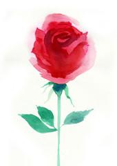 Watercolor red rose