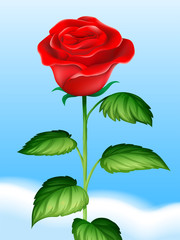 Red rose and sky background