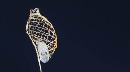 Esqueleto de folha casulo.