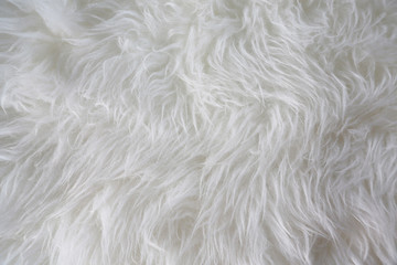 White fur background. Close up Wall mural
