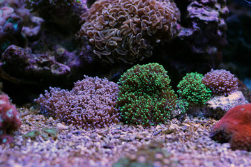 Mixed colors of hairy mushroom corals