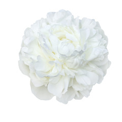 pale white peonies isolated on white background