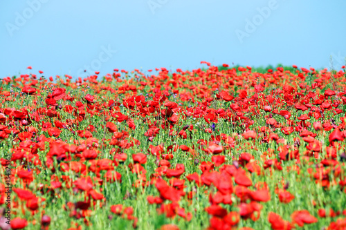 fresh red puppy meadow - photo #13