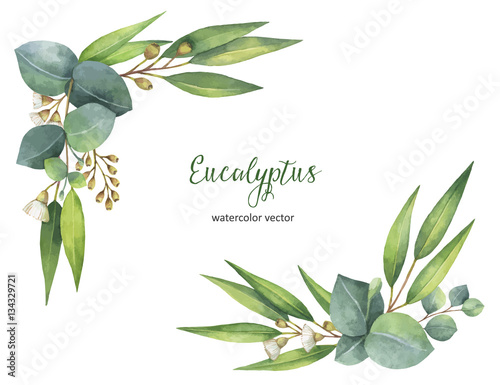 Quot Watercolor Vector Wreath With Green Eucalyptus Leaves And