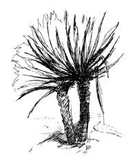 Palma. Ink sketch. Hand drawn illustration.