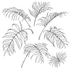 Palm Fronds Sketch