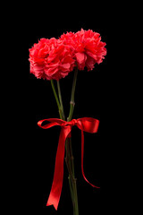 Red carnations isolated on a black background
