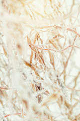 Winter holiday background. Branch willow tree in snow. Willow branches covered with hoarfrost. Coloring and processing photo with soft focus in instagram style.