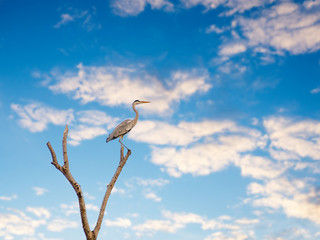 Birds perch on a branch on a background of blue sky..