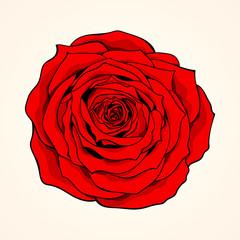 Hand-drawn red rose on light background. Vector illustration, eps 10.