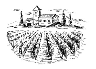 Rows of vineyard grape plants and house in graphic style