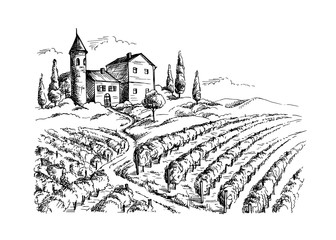 Rows of vineyard grape plants and castle in graphic style