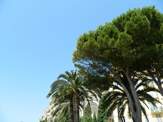 Palm trees in Nice