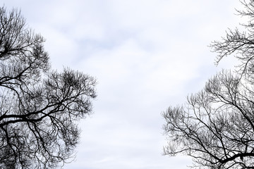 Ветки на фоне неба