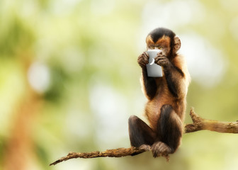 Monkey Texting on Cell Phone