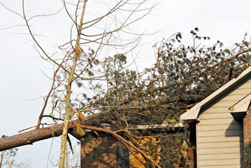 tornado damaged house with a pine tree on the roof