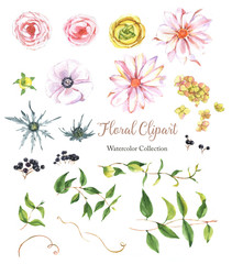 Hand-drawn botanical colorful floral clipart. Watercolor natural collection with: leaves, flowers, berries. Rose, ranunculus, hydrangea, black berries.