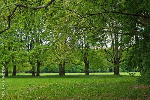 b090ece62295 Panorama di campagna con fila di alberi verdi in primavera
