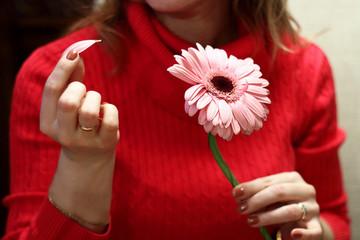 Gerbera flower in female hands. Fortune-telling on a flower. Wom