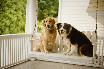Two dogs sitting together on a porch chair.