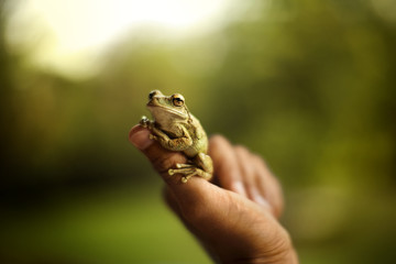 Small green frog perching on a man's thumb.
