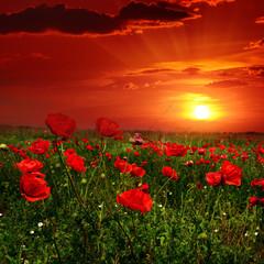 Fototapete - Bright sunrise in poppy field