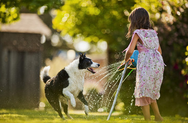 Young girl and dog playing with a sprinkler in a back yard.