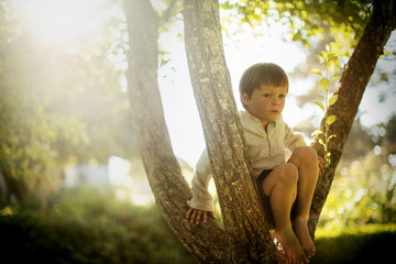 Young boy sitting alone in a tree.