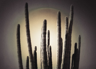 Cactus plants in a row.
