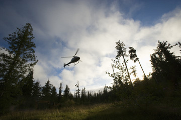 Helicopter coming into land in a clearing.