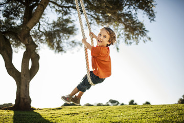 Happy young boy playing on a tree swing.