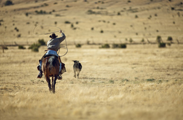 Rancher swinging a lasso toward a cow while riding a horse.