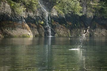 Fish jumping out of lake