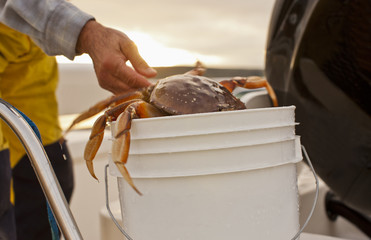 Mid adult person placing a crab into a bucket.
