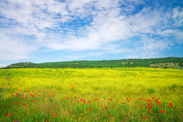 Beautiful colorful landscape with flowers. Spring meadow.