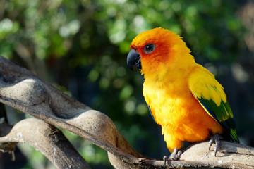 closeup of yellow parrot bird
