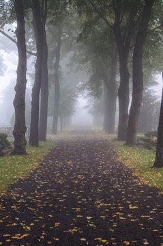 Alley in a morning fog in a graveyard