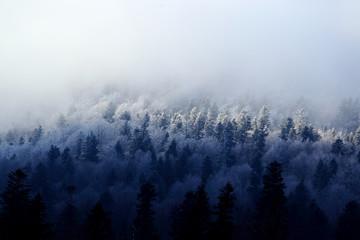 Bieszczady w zimie