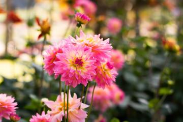 Nature morning flower