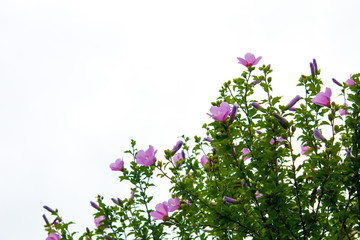 아름다운 무궁화꽃