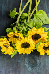 Yellow sunflowers with green leaves, on dark texture