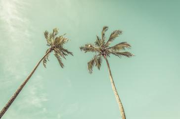 Palms on clear sunny sky, vintage colors