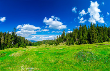 Valley in the alpine coniferous forest. Summer day. Green lawn. Blue sky with clouds. Summer landscape.