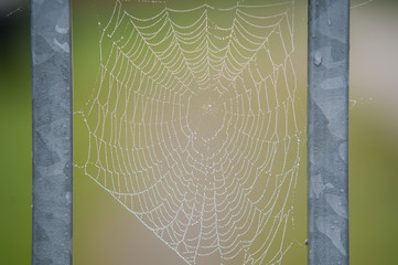 Spinnennetz zwischen zwei Stäben