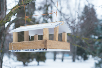 bird feeder in winter