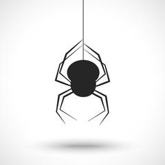Spider on web isolated on white background.